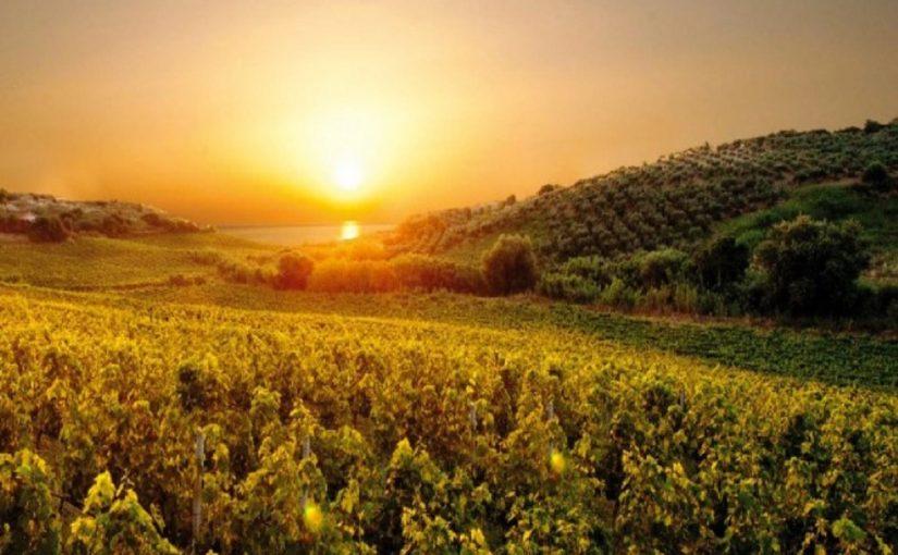 Lamezia Wine: the Phoenician culture of wine