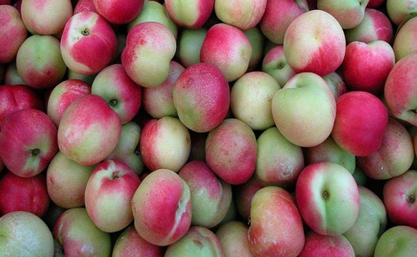 Fruits of Calabria: The Merendella Peach